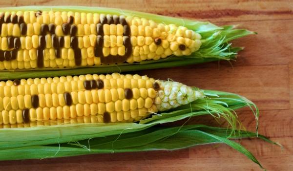 Как да разпознаваме ГМО плодовете и зеленчуци