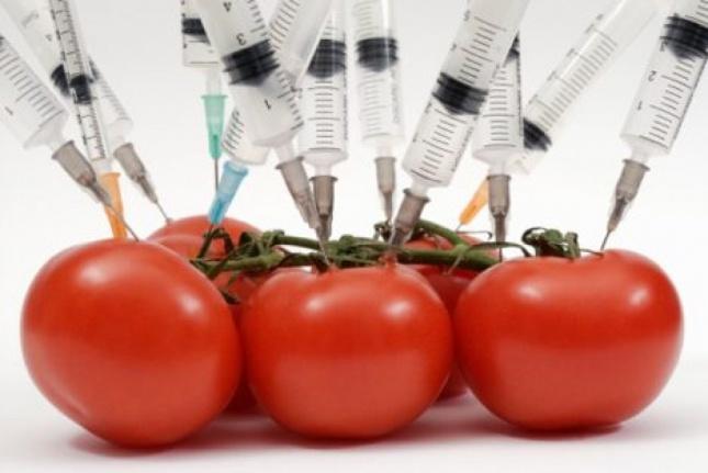 гмо домати